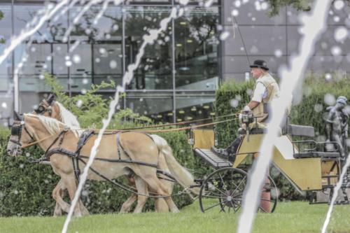 Hochzeitskutsche (11)